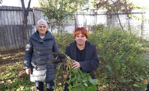 Working in our garden - the beneficiaries gather the harvest